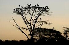 Nature walk and bird watching on a beautiful evening with Colobus Tours